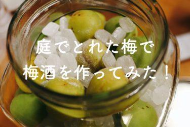 【レシピ】庭でとれた梅で梅酒を作ってみた!【手作り】