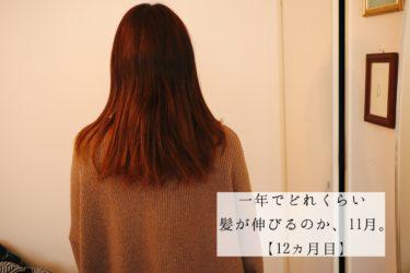 一年でどれくらい髪が伸びるのか、11月。【12ヵ月目】
